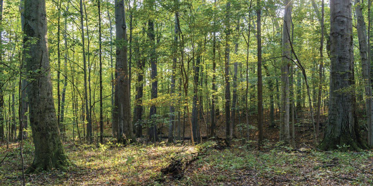 sacred_grove_trees_sunlight.jpeg